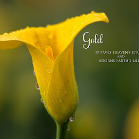 Golden Lily by Richard Duerksen - Typography Captioned Photos ( ca, lily quote, carmichael, yellow, flowers )