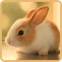 Cute Rabbits Wallpapers icon