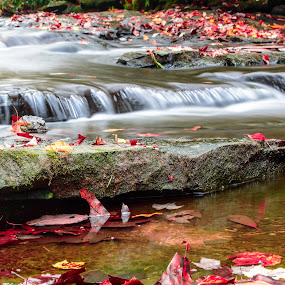 Fall Water by Michelle Nolan - Landscapes Waterscapes ( water, west virgina, fall, water falls, bobcack state park,  )