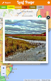 Foliage Leaf Peepr- screenshot thumbnail