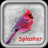 Pocket Color Splasher Free