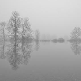 Hazy silhouettes by Silva Predalič - Black & White Landscapes ( water, foggy, trees, silhouettes, hazy,  )