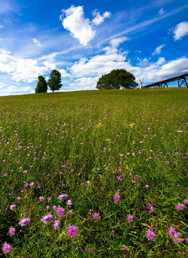 One Less Tree by Sergio Smiriglio - Landscapes Prairies, Meadows & Fields ( field of flowers, viaduct, mountainville, sergio smiriglio, salisbury mills, trees on a hill, cornwall, sony a7 )