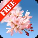 Sakura FREE Live Wallpaper logo