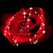 Red Shim Rose Live Wallpaper