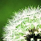 Pollen-Vorhersage