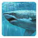 Shark 3D Live Wallpaper icon