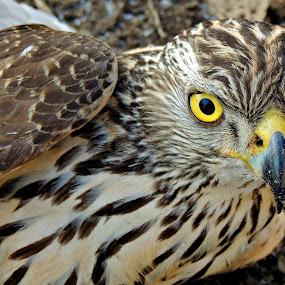 Glances by Doru Sava - Animals Birds ( bird )