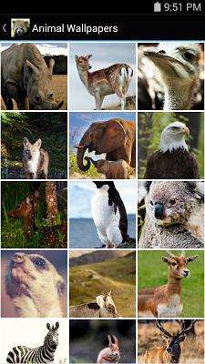 Animal Wallpapers - screenshot