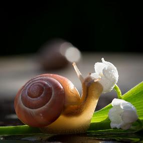 Snail by Manuela Kägi - Animals Other