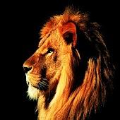 3D Lion King