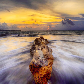 Log in the beach by Sam Moshavi - Landscapes Waterscapes