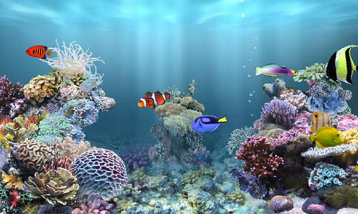 Download apk files for free anipet marine aquarium hd for Feed and grow fish free no download