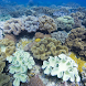 Hot Tropical Corals FREE FREE