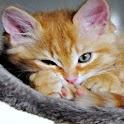 Love Cats Wallpaper logo