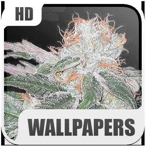 Marihuana Wallpapers 生活 App LOGO-APP試玩