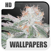 Marihuana Wallpapers