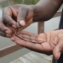 Earth worm