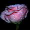 IMG_5694.jpg