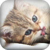 Kitty cats HD