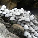 Fairies Bonnets