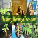 Healing Moringa Tree LLC icon