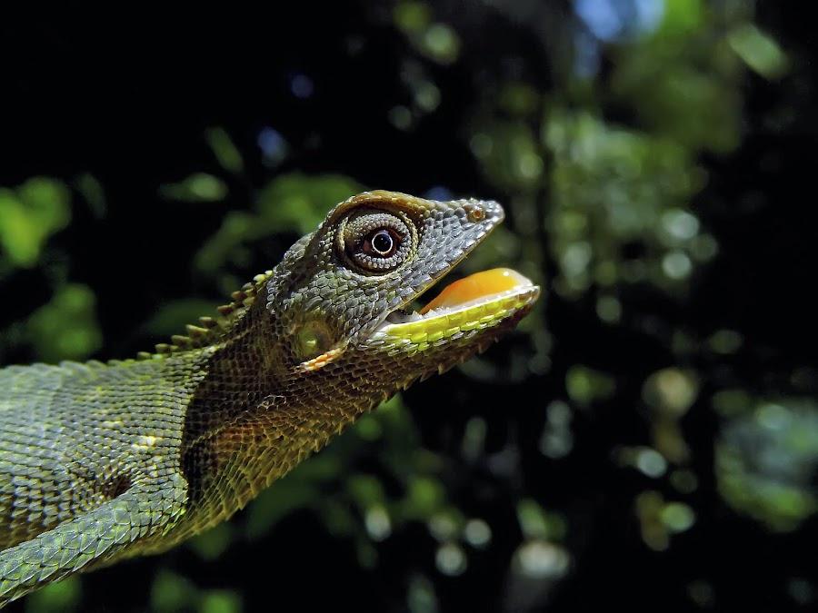baby Godzilla by Hendrata Yoga Surya - Animals Reptiles