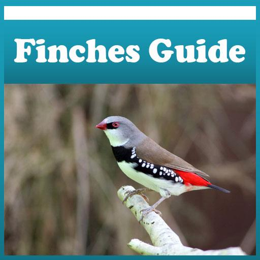 Finches Care Guide Tips