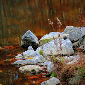 by Missy Grove Horne - Nature Up Close Rock & Stone ( , fall, color, colorful, nature )