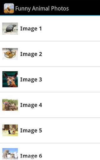 Funny Animal Photos 4U