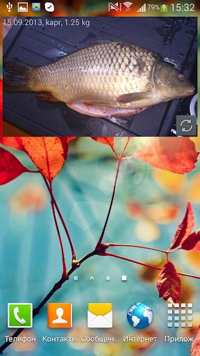 MP钓鱼照片的Widget