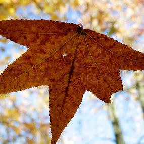 Falling, falling by Ty Shults - Uncategorized All Uncategorized ( color, autumn, fall, trees, leaf, leaves )