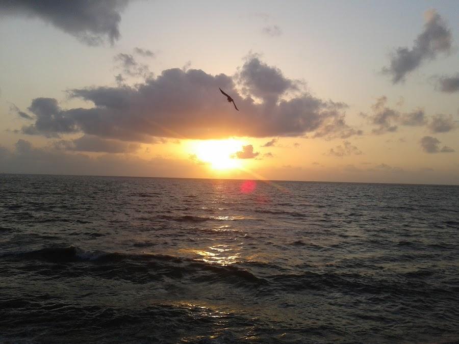 Fly High. by Kushal Mittal - Landscapes Sunsets & Sunrises