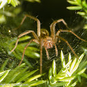 Dust spider