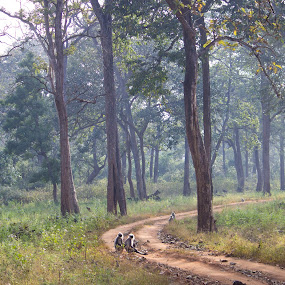 Monkeys in the Jungle by Arun Prasanna - Landscapes Forests ( #langur monkey #trail #forest #india #woods )