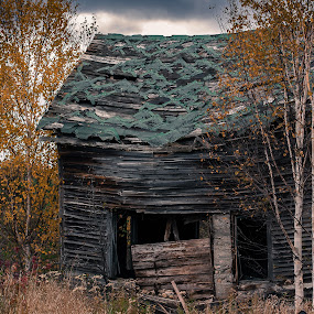 Open Floor Plan by Jennifer Bacon - Buildings & Architecture Decaying & Abandoned ( birch tree, wood, fall, house, leaves, decay, abandoned )