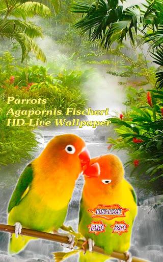 Parrots Agapornis Fischeri
