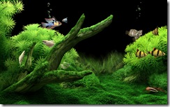 DreamAquarium - un screen saver de vis