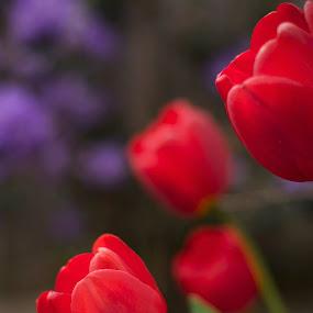 Artistic director: Roberta Ruble by Amy Woldrich - Flowers Flower Gardens (  )