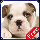 Bulldog+ Free icon