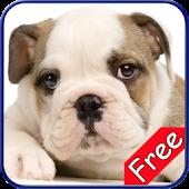 Bulldog+ Free