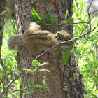 Squirrel 松鼠