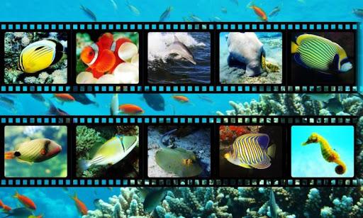 ベスト海の動物