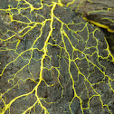 Many-headed Slime