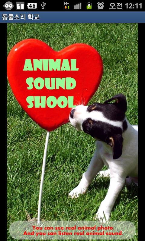 Animal Sound School - screenshot