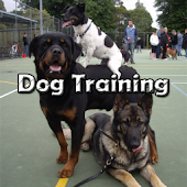 DOG TRAINING..