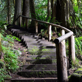 stairway to the giants! by Todd Ivanhoe - Landscapes Forests