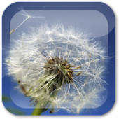 Dandelion Live Wallpaper ★