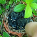 OH MY GOSH THESE BABY BIRDS R ADORABLE!!!!!!!