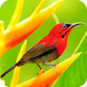 Bird HD Live Wallpaper Animals icon